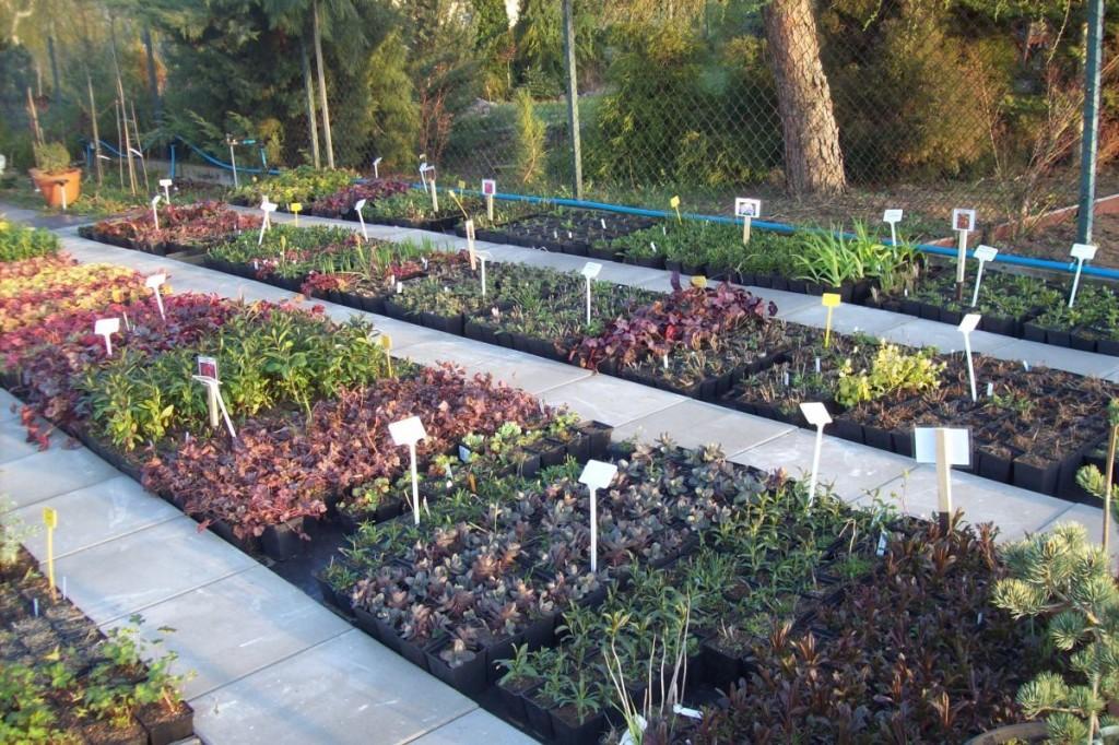 adflora - nasz ogród